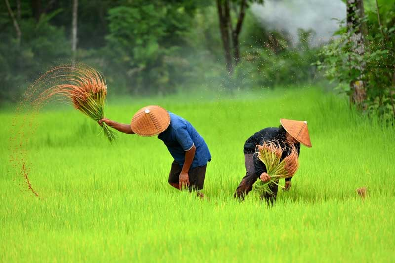 Agricultural Indonesia