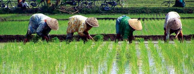 indonesian commodity prospects company registration
