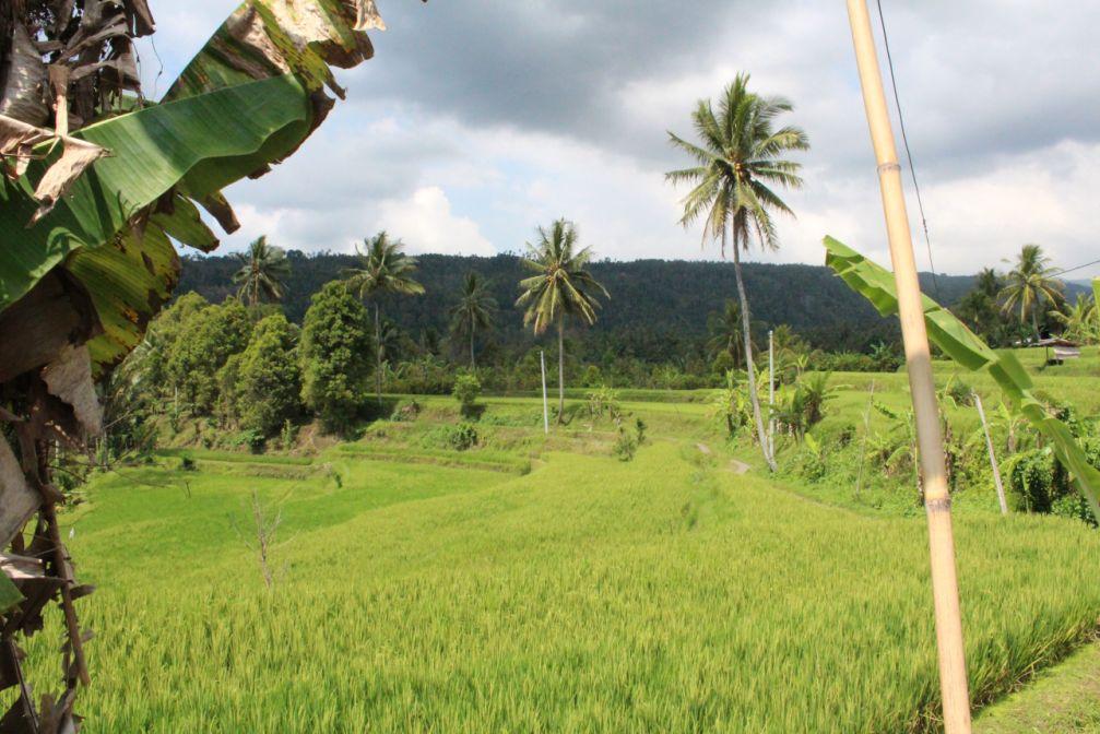 agrikultur indonesia