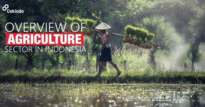 agriculture sector in indonesia