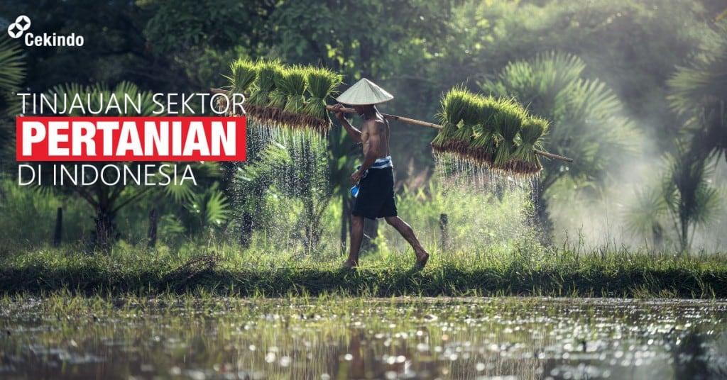 tinjauan sektor pertanian di indonesia
