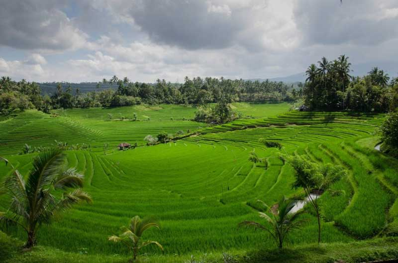 australians starting a business in bali - know your options