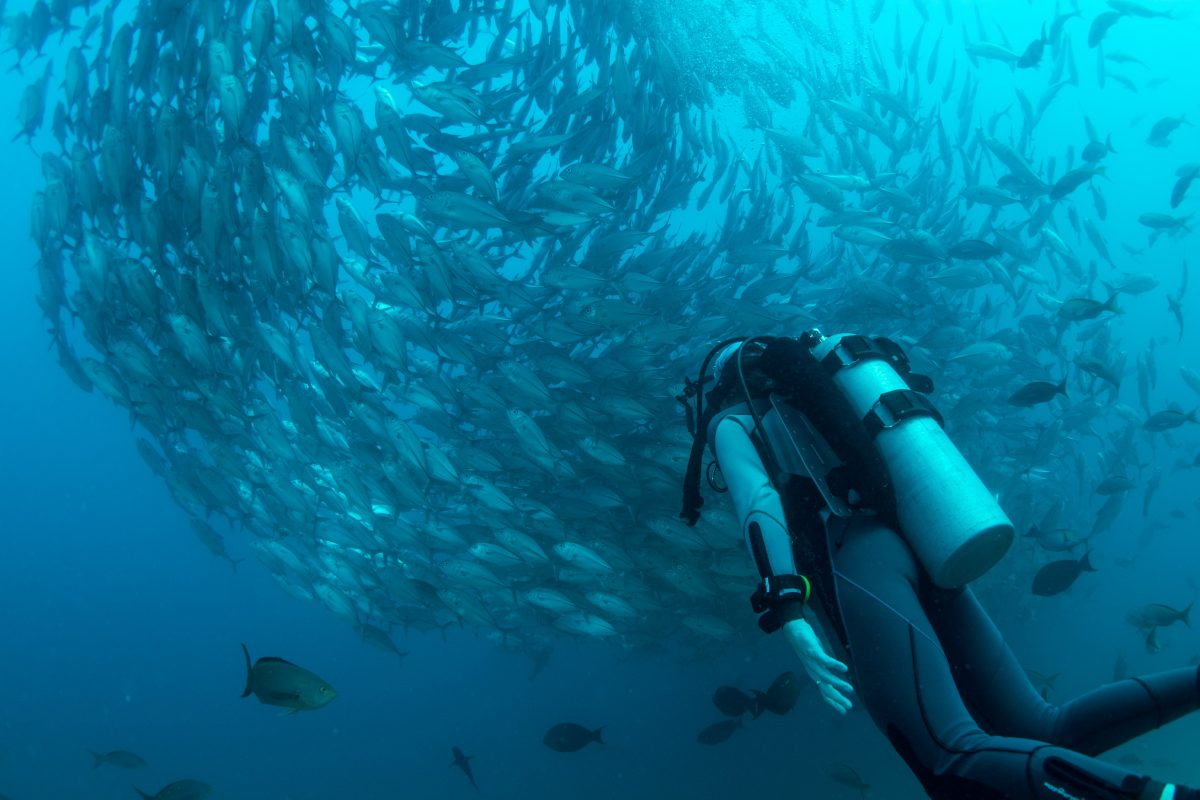 diving business bali